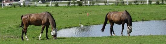 Jezdecká stáj Robin