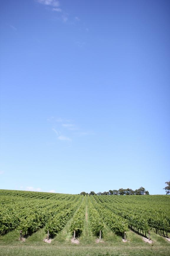 vinice dyonýsův