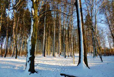 Fotil Walter Binder: Sníh a led v Jindřichově Hradci