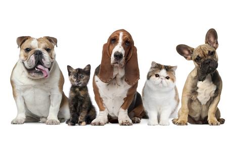 veterina kočka pes