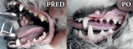 JH Vet: Zubní kámen nezpůsobuje pouze zápach z tlamy
