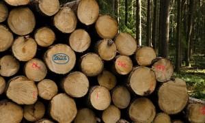 EXPO I. - těžba - výkup - doprava dřeva