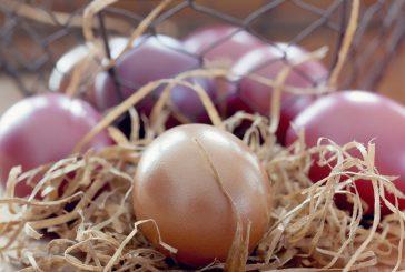 Čarovný krámek: Jarní svátky Velikonoce, čarodějnice, jarní rovnodenost…