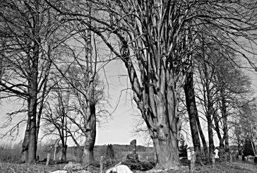 Amálčina dubnová fotoprocházka