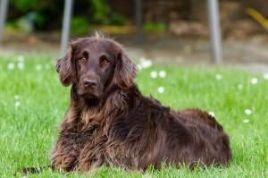 pes veterina dog-782498_1280