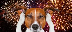 JHvet radí: Má Váš pes strach zohňostrojů a dělobuchů?