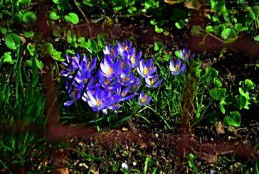Fotila Amálie: Březnová fotoprocházka rozkvetlým jarem