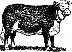 bull-153035_1280 býk