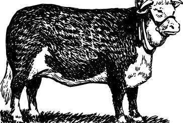 Jak Prajzi nad volky tancovali (Studená a okolí v pověstech #3)