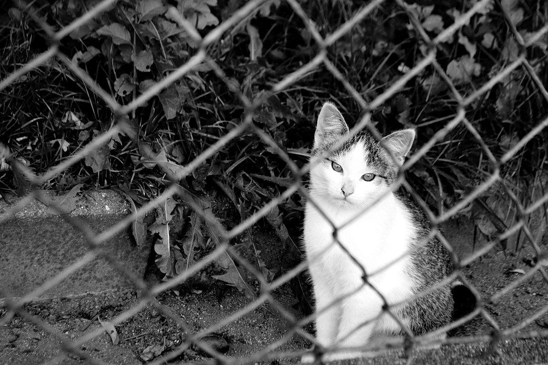 Fotila Amalie: Srpen v Hradci