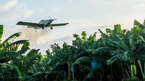 Stromy budou vyprávět příběhy lidí pěstujících banány