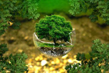 Izolační zeleň v Jindřichově Hradci
