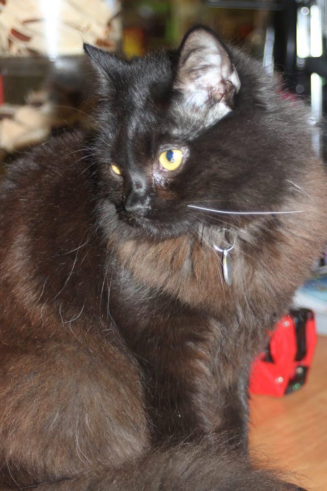 Prosba o pomoc: Ztratil se černý kocourek