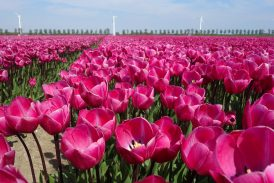 """Od pátku začíná v Zahradním centru """"Holandský týden"""""""