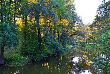Příroda vjindřichohradeckém parku - obratlovci