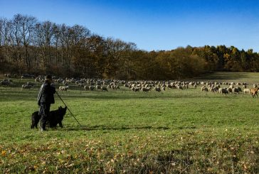 Pastýři, pastevci, pasáci v Deštné (Z historie Deštné #9)