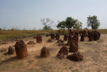 Gambie – Kořeny, magické kruhy a Kola pro Afriku (cestování s Kateřinou Duchoňovou #7)