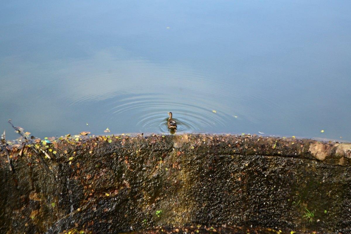 Fotila Amalie: Kamenice nad Lipou