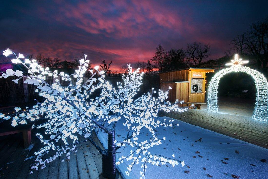 Zoo Hluboká je vánočně nasvícená