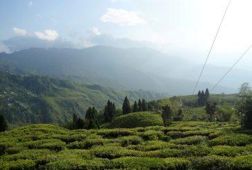Darjeeling – pestrá směs kultur, čajové plantáže a unikátní úzkokolejka v podhůří Himálají (cestování s Kateřinou Duchoňovou #9)