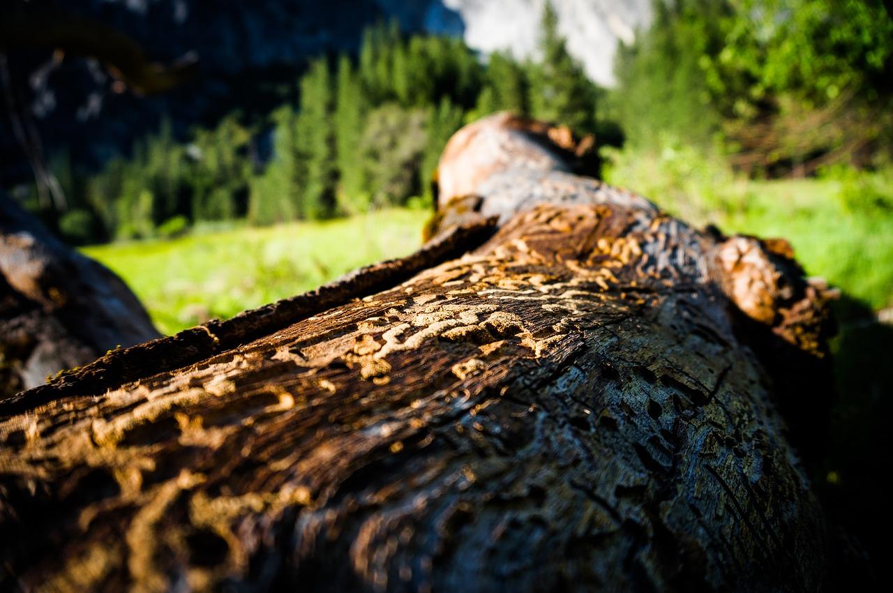 Informace vlastníkům lesů ve věci kůrovcové kalamity