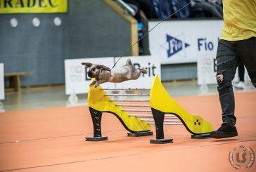 Fotil Lukáš: Králičí hop v jindřichohradecké sportovní hale