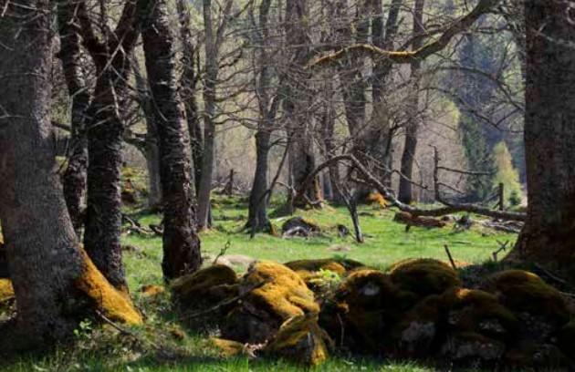 Monolog času / Šumava vlkům