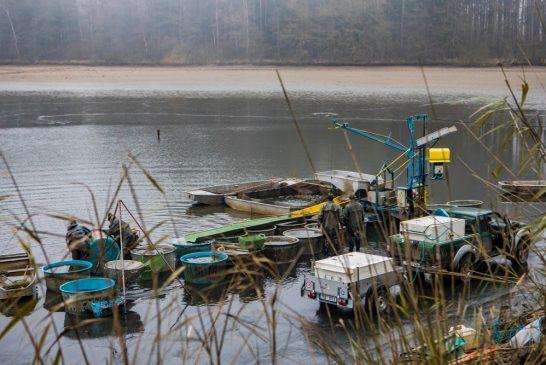 Dva roky uplynuly jako voda a výlov rybníka Holub je za námi (foto)