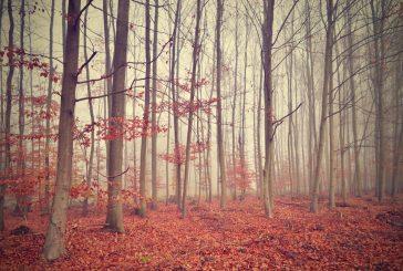 Fotila Jana: Mlhavý listopad na Jindřichohradecku