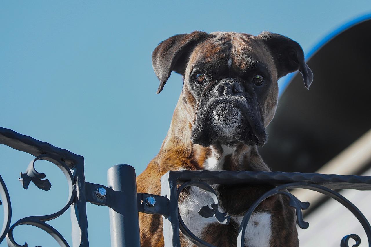 Možnost bezplatné evidence v registru psů pro občany Jindřichova Hradce