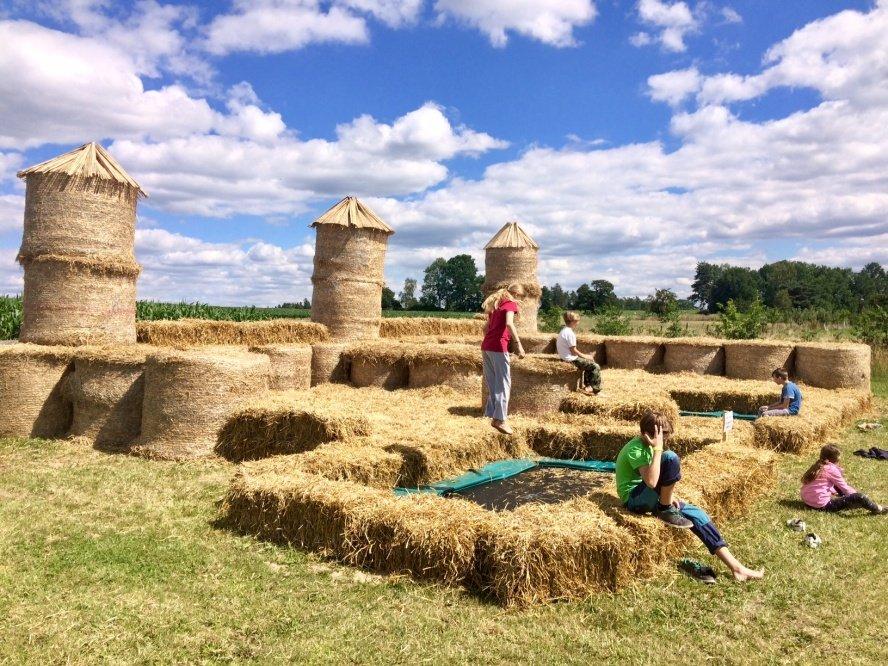Léto v kukuřici