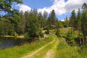 Pěšky po Hradecku #7: Z Nové Bystřice na Landštejn a zpět