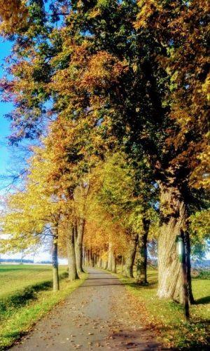 alej-podzim