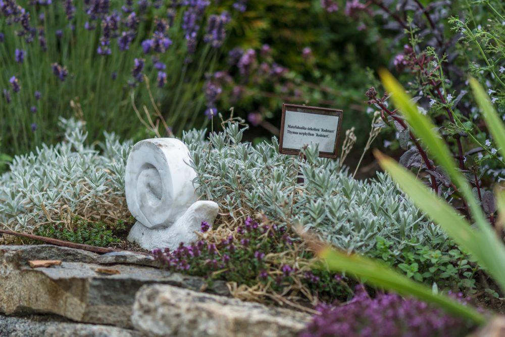 Ahoj Krafferova zahrado - Přijďte se seznámit se staronovou KRAFFEROVOU ZAHRADOU. Inspirativním místem, kterým kráčela historie. Je v něm skryta nádherná barokní zahrada, prvorepublikové zahradnictví i střípky z nového tisíciletí. Pojďte tento příběh objevovat s námi během Víkendu otevřených zahrad. Probíhat budou komentované prohlídky, seznámíte se s principy přírodních zahrad a také s metodami zpracování pokladu ze zahrady. Dále se můžete těšit na výbornou kávu od Kafe Okolo, skvělá biovína z krásného prostředí pod Pálavskými vrchy, představíme vám lokální pivovar ze stráže nad Nežárkou a osvěžit se můžete limonádou třeboňských Bylinek od Světa. A ani vaši nejmenší se nebudou nudit - díky květinové dílně Lučního klubu Živě v trávě. Svou návštěvou budete kromě zahrady moci podpořit i Diecézní charitu České Budějovice.