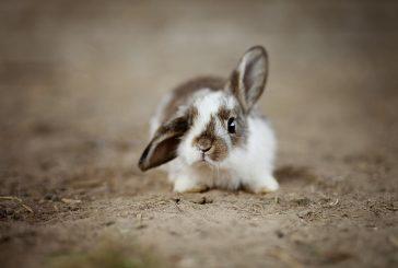 45. Oblastní výstava králíků, drůbeže a holubů v Žirovnici